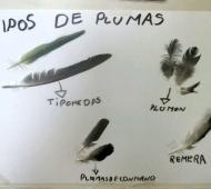 Información sobre las plumas de las aves.